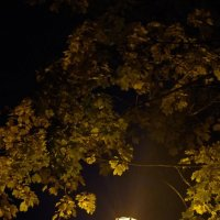 Осенний фонарь :: Andrad59 -----