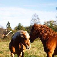 Любовь и лошади :: Семен Гольцман
