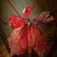 И попросились листья на портрет.... :: Tatiana Markova