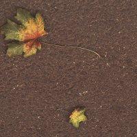 Осень пришла... :: Ксения Старикова