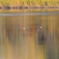 осень на реке :: linnud