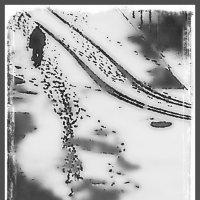 Первый снег. Следы. :: Григорий Кучушев