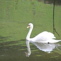 Прекрасные птицы-5. :: Руслан Грицунь