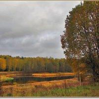 Волга в окрестностях погоста Новый Торг :: Дмитрий Анцыферов