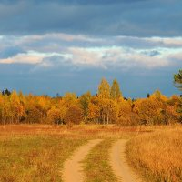 Из серии мои любимые дороги.Осень золотая :: Павлова Татьяна Павлова
