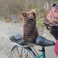 встреча в лесу... :: Ольга Cоломатина