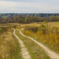 Осенний пейзаж... :: Галина Кучерина