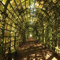 Осень в Летнем саду. Пергола :: Вера Моисеева