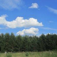 облака,белокрылые лошадки! :: tgtyjdrf