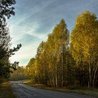 Осенняя дорога :: Игорь Егоров