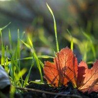 Вдвоем в осень-1 :: ФотоЛюбка *