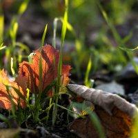 Вдвоем в осень-2 :: ФотоЛюбка *
