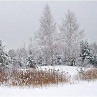 Зимняя зарисовка :: евгений савельев