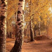 Под закатным солнцем октября :: Татьяна Ломтева