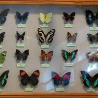 О бабочках :: Наталья Джикидзе (Берёзина)