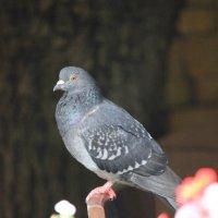 Городские птицы-2. :: Руслан Грицунь