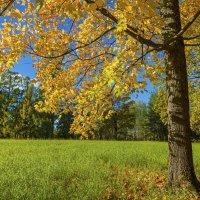 Санкт-Петербуг. Царское село. Екатириненский парк. Осень. :: Виктор