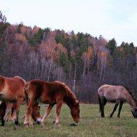 Лошадь, природы созданье чудесное, с тобой единение чувствую тесное ... :: Евгений Юрков