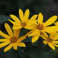 Сорву я цветы для букета,пусть дом мой украсят они... :: Александр Попов