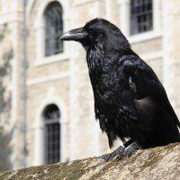 Тауэрский ворон :: Ekaterina Stafford