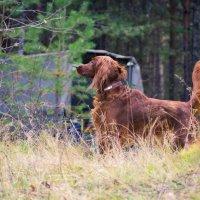 Прогулка в осеннем лесу :: Алексей. Бордовский