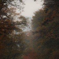 Осенняя тишина :: Олег Лопухов