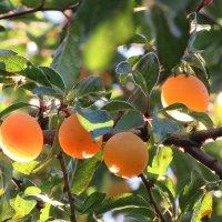 Поздние плоды :: Mariya laimite