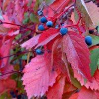 Осенний наряд... :: Тамара (st.tamara)