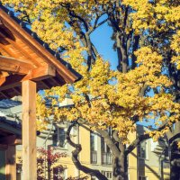 Ботанический сад осенью :: Александра Strix