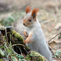 ...где тут орешки для меня...? :: Елена ))
