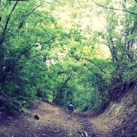 Дорога в лес :: Skivchi :)