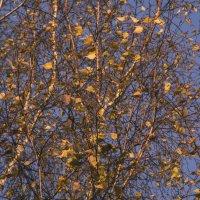 Осенние листья на ветру :: Aнна Зарубина