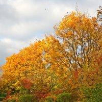 Мне кажется, осень похожа на костер. .... :: Galina Dzubina
