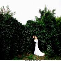Свадьба :: Евгений Пеньков