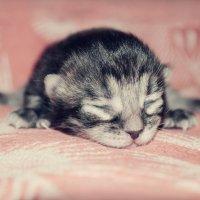 Kitten..ღღღ :: Elena Polyakova