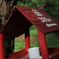 Птичья кормушка-2. :: Руслан Грицунь