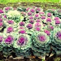 Цветы :: Лебедев Виктор