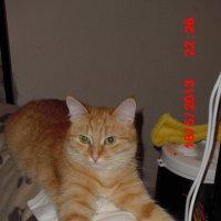 Моя животинка :: Татьяна