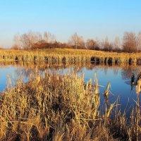 Голые деревья,желтая трава.Осень наступила и вошла в права... :: Александр Попов