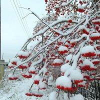 По колено снег у нас.А у вас ? :: nadyasilyuk Вознюк