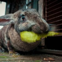 Кролик Мама :: Марина Дубровина