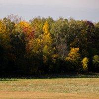 Осень :: Андрей Синявин