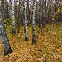 Короток век Золотой Осени :: Андрей Лукьянов