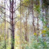 осенний лес :: Мария Корнилова