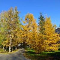 Осень в Ленинском садике :: Наиля