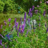 Этюд с цветочками на пруду. :: Александр Атаулин