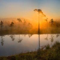 Из света сотканный. :: Фёдор. Лашков