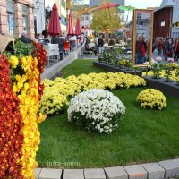 Фестиваль хризантемы :: Lüdmila Bosova (infra-sound)