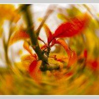 Вот и осень... :: Oleg Tumakov