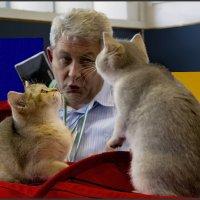 Хозяин ты чё,правда,что ли?!-из серии Кошки очарование мое! :: Shmual Hava Retro
